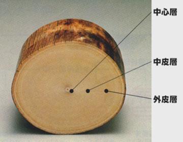 象牙断面図